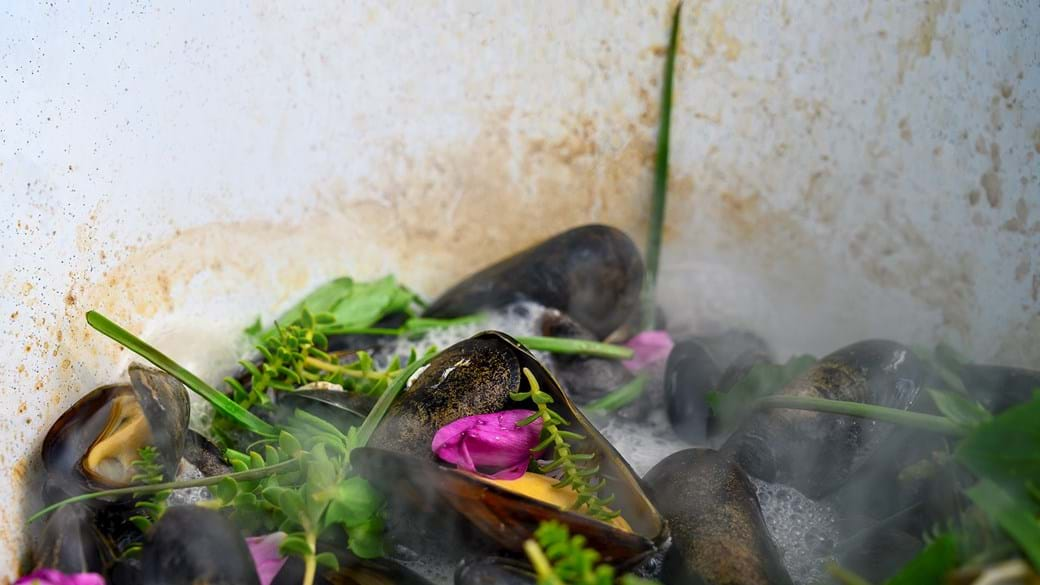 Muslinger og strandurter